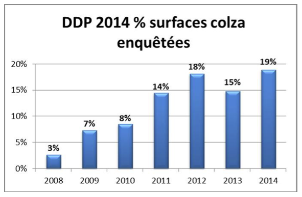 surfaces_colza