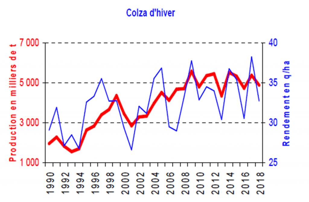 Colza d'hiver - Colza - FOP
